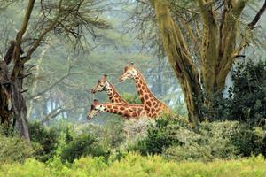 Tiere des afrikanischen Kontinents